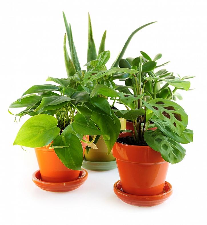 Pokojové rostliny i v zimě potřebují naši péči (Zdroj: Depositphotos)