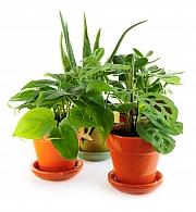 Pokojové rostliny i v zimě potřebují naši péči