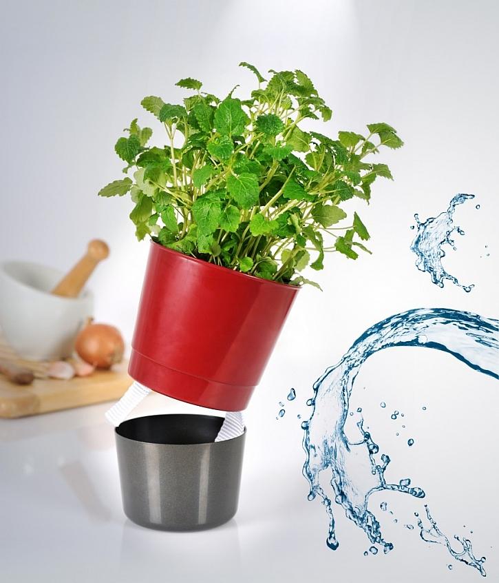 Jak pěstovat bylinky na balkoně?
