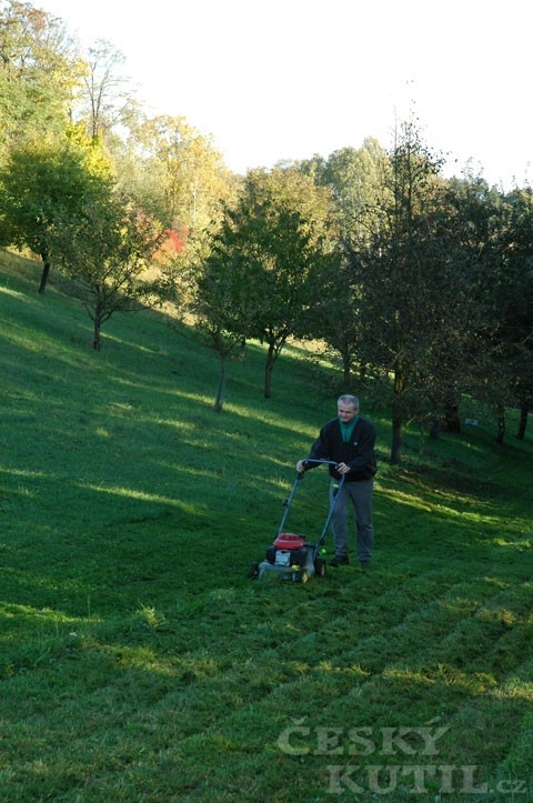 Výsev trávníku