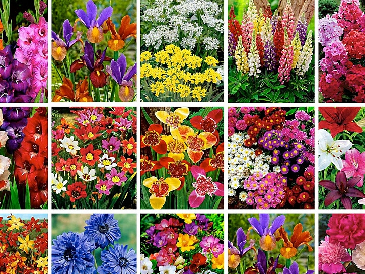 ... vybírejte z pestré nabídky květin katalogu Bakker jaro 2014