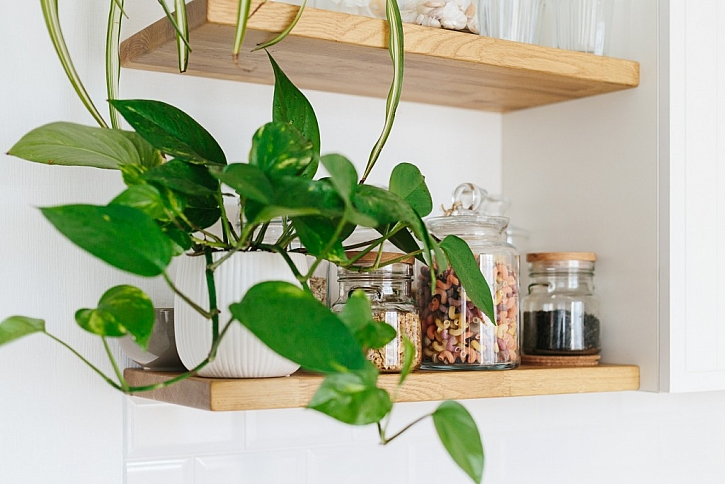 Potos neboli šplhavice zvládne dlouhou dobu dokonce přežít jen ve sklenici s vodou, vůbec nepotřebuje květináč se zeminou!