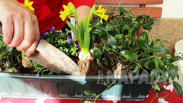Jak si udělat svěží květinový truhlík aneb jaro je tady  9