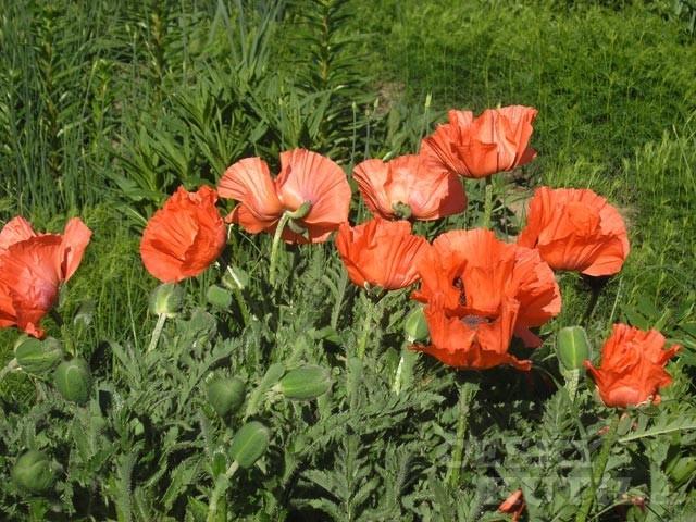 Co na květen říkají lidové pranostiky?