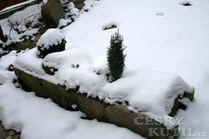 Leden v zahradě
