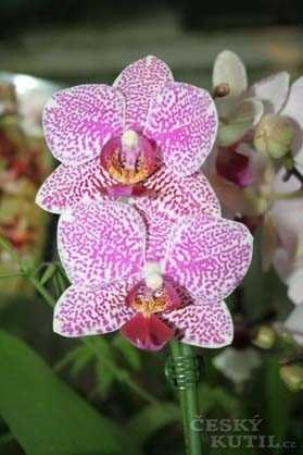 Líbí se vám orchideje?