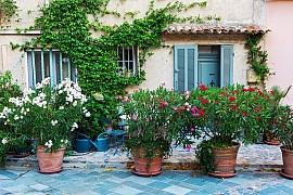 Popínavky jsou pro váš balkon či terasu ideálním řešením