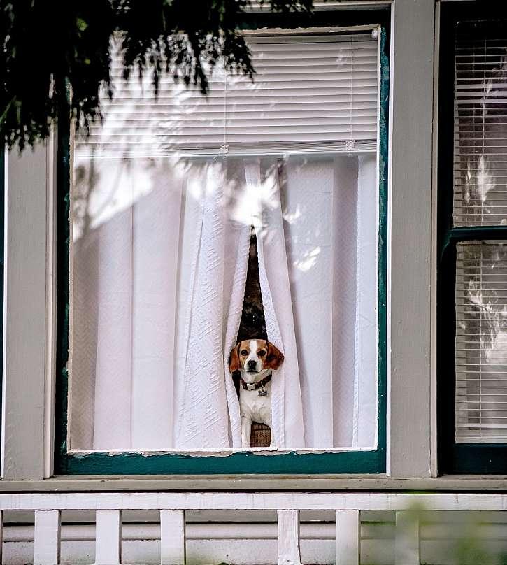 Pes o samote