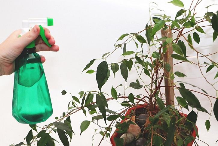 Rosení pomáhá řešit problém suchého vzduchu