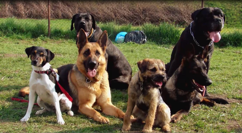 Základní výcvik štěněte: Správný výběr rasy i psí školy