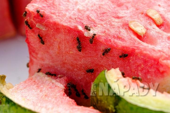 2_ants-3363853_1920