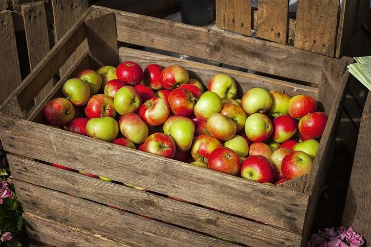 Veškeré uskladněné ovoce bychom měli pravidelně kontrolovat, abychom předešli případným chorobám a ihned vyloučily vše, co má vady (Zdroj: Depositphotos)