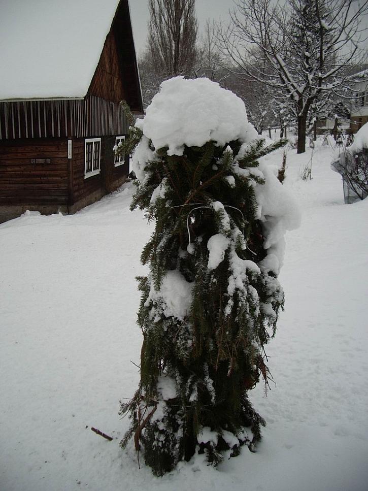 Větvičky chvojí stromky a keře ochrání