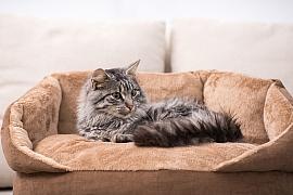 Kočka seniorka – stárne snoblesou a nemá ráda změny