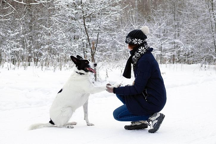 Víte, čím ošetřit tlapky vašeho miláčka v zimě? (Zdroj: Depositphotos)