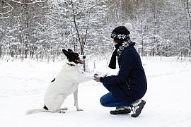 Čím ošetřit zvířecí tlapky v zimě?