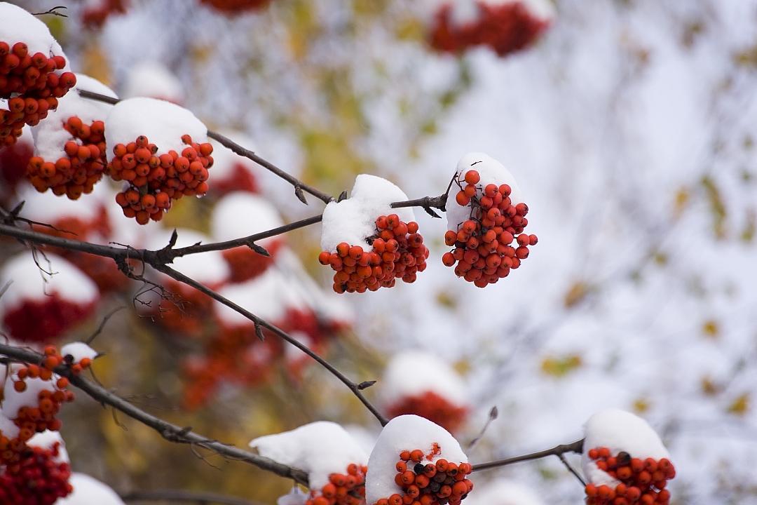 obrázek tématu: Lednová zahrada