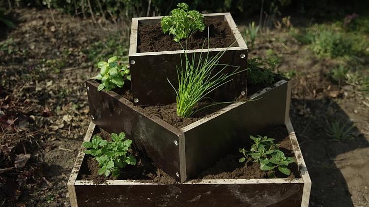 Jak se po zimě postarat o bylinkové záhony