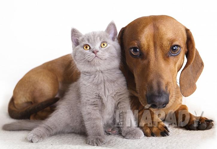 Kočka a pes