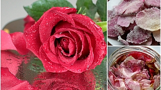 Nevíte, co růžemi? Udělejte si růžové květy do pusy arůžový olej na pusu