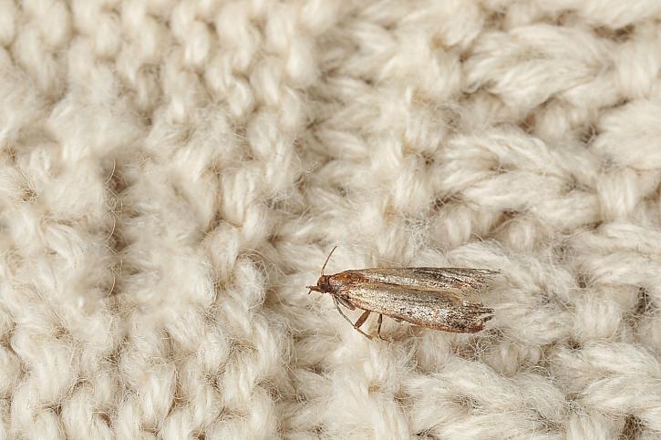 Jak se zbavit molů, kteří milují naše svetry? (Zdroj: Depositphotos)