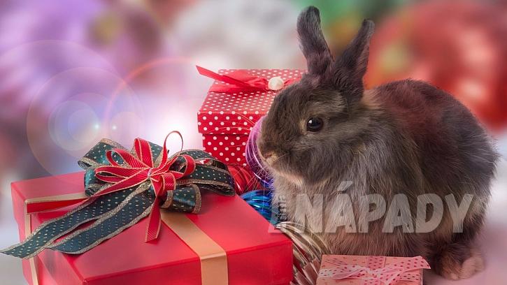 Jaký vánoční dárek by si asi přál králíček?