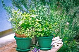 Čerstvé bylinky by při grilování neměly chybět, dodají masu jedinečnou chuť