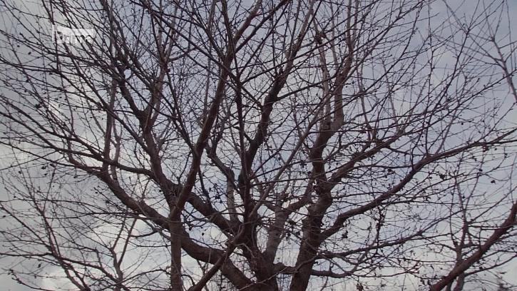 Nezapomínejte na přihnojování stromů (Zdroj: Přihnojujeme ovocné stromy)