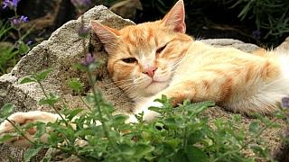 Víte, po kterých bylinkách kočky šílí? Izvířata mají své drogy