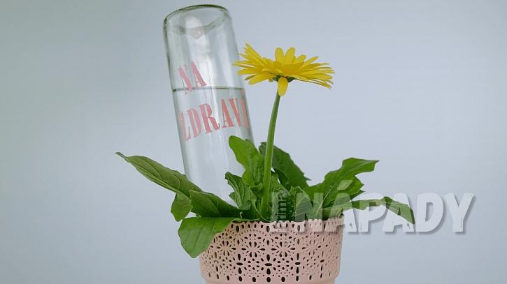 Zálivka ze skla: láhev zapíchněte do zeminy