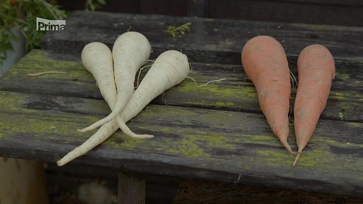 Kterou zeleninu vyséváme na zimu? (Zdroj: Vyséváme a vysazujeme ozimou zeleninu)