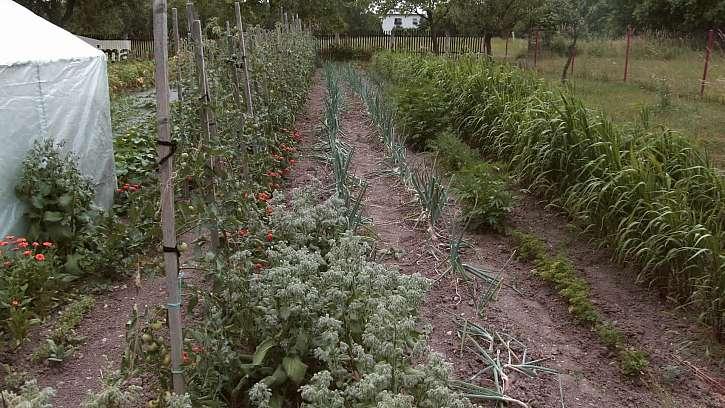 Rychlé zelené hnojení
