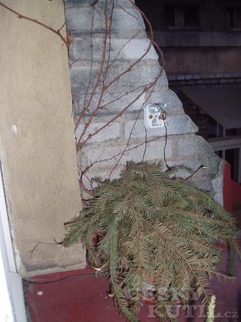 Rostliny v kontejnerech, kořenáčích