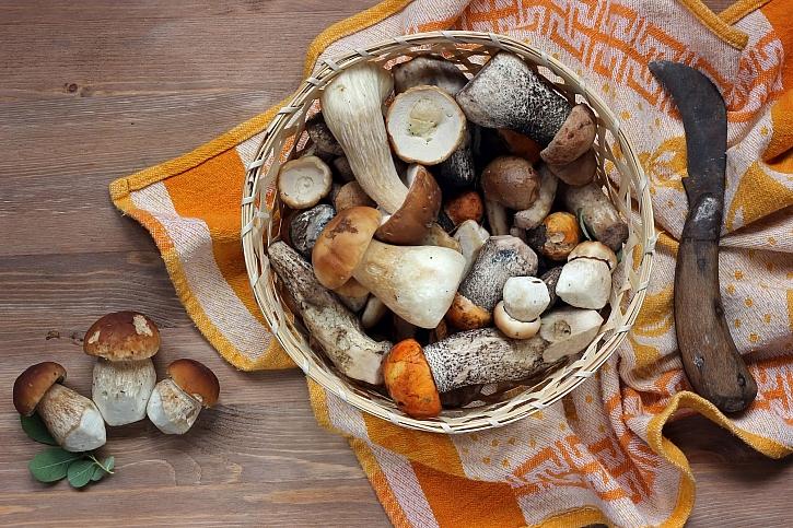 Sesbírané houby
