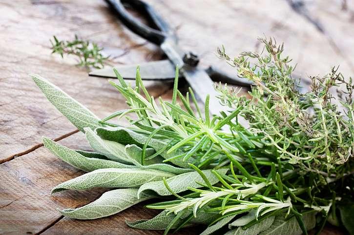 Čerstvé bylinky