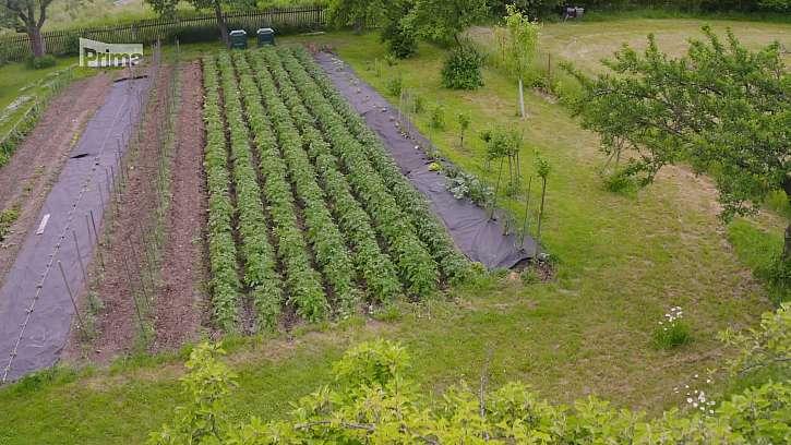 Kultivační práce na zahradě