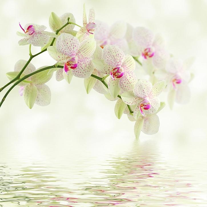 Orchideje patří mezi stálice mezi pokojovkami a jejich pěstování není tak složité (zdroj: Depositphotos)