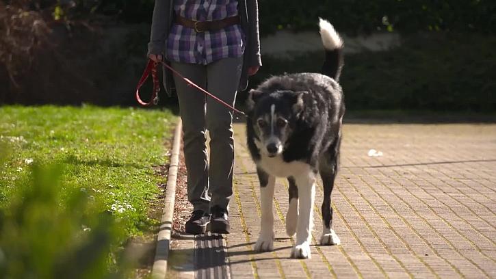 Jak zneškodnit různé druhy parazitů u psů