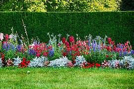 Tipy zkušených zahradníků: Jak a kdy správně stříhat živý plot