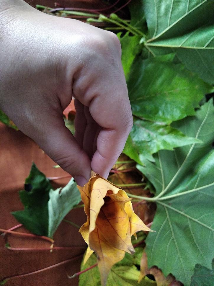 Špička květu