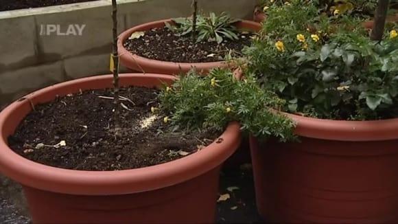Jak zazimovat rostliny na terase
