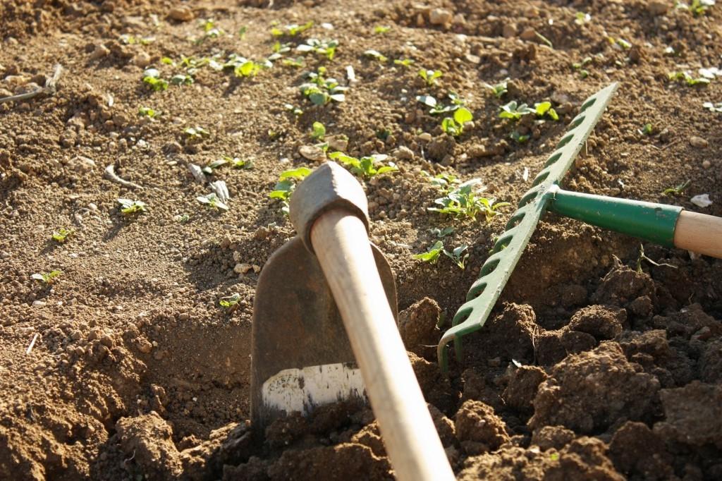 Využijte záhony po sklizni k přípravě na jaro
