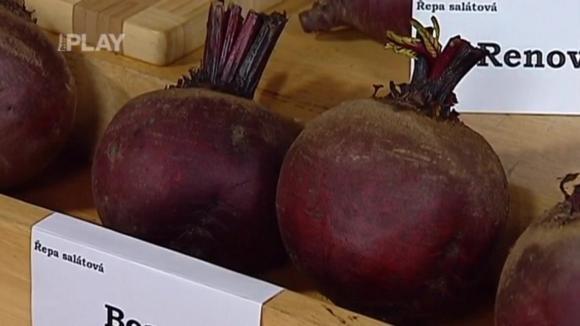 Odrůdy červené řepy