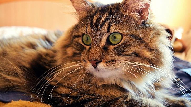 Jak žít s domácími mazlíčky v čistém bytě: všudypřítomné chlupy