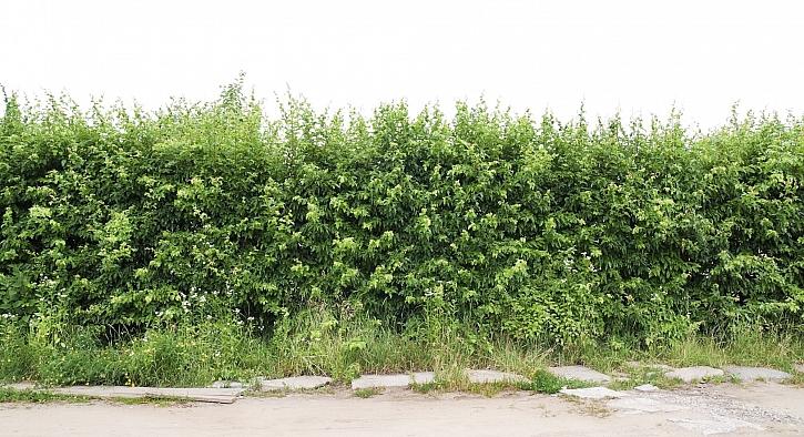 Neudržovaný plot