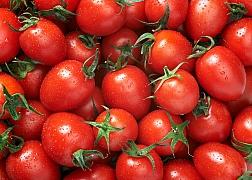 Co udělat s přebytkem rajčat?