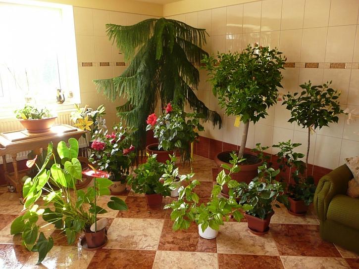 Na pokojové rostliny na jaře nezapomínáme