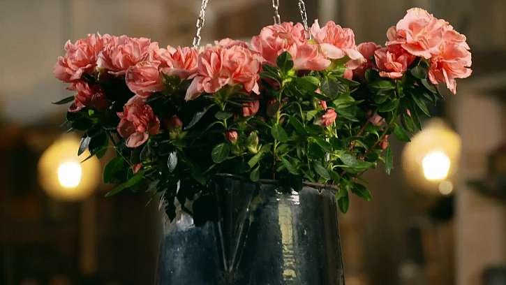 Květy v kovové nádobě