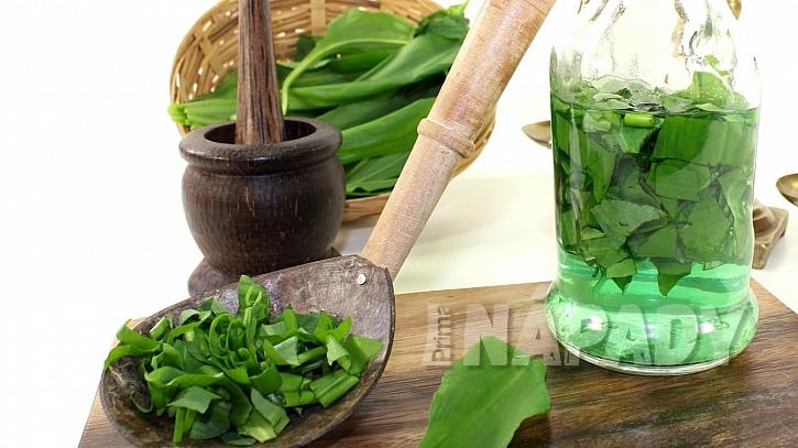Česnek medvědí (Allium ursinum): medicínka pro jarní pročistění těla