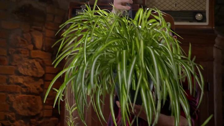 Tato rostlina je lepší, než čistička vzduchu
